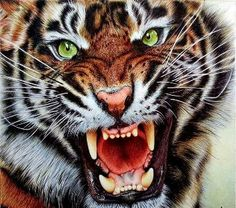 Angry Tiger - Ballpoint Pen drawing by Samuel Silva / Portugal - London, UK