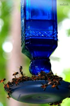 Bee's love sugar