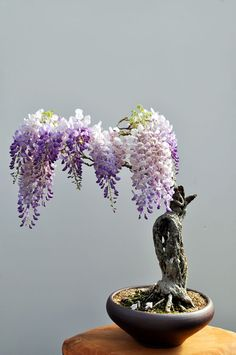"""坂井直樹の""""デザインの深読み"""": 中国で発祥した盆栽は、禅仏教の影響を受けて長い時間をかけて開発されてきた。多くの日本文化の元は外来だ、しかし再デザインを繰り返しやがて日本的な物に変容させた。"""