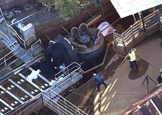 Four people were killed Tuesday after a river rapids ride malfunctioned at a popular theme park on Australia's east coast, officials said. Two men and two women died while on the ride at Dreamworld, a ...