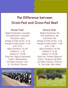 Grain-Fed vs. Grass-Fed Beef