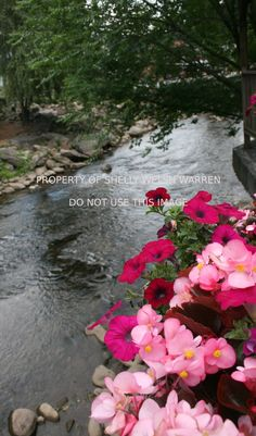 Along the Creek, 5x7 Photo Print by Shelly Welsh Warren