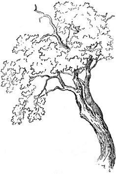 How To Draw Trees And Oak With Simple Steps Tutorial