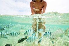 Image via We Heart It https://weheartit.com/entry/168277026/via/10449915 #animal #beach #bikini #blonde #fashion #fit #girl #hair #hipster #indie #motivation #ocean #photography #summer #tan #wildlife #gopro