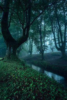 Forests before camper's refuge