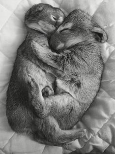 Bunny cuddles ❤️❤️. Come get some cuddles at Fuzzy Faces Refuge in Clayton, NC!