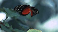 vuelo-de-mariposa