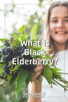 Benefits of Black Elderberry Garden Shrubs, Flowering Shrubs, Elderberry Benefits, Elderberry Syrup, Gardening For Beginners, Gardening Tips, Cough Remedies For Adults, Herbal Medicine, Homeopathic Medicine