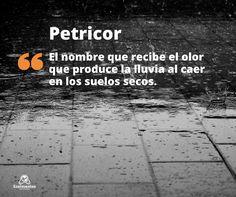 Petricor es el nombre que recibe el olor que produce la lluvia al caer en los suelos secos.