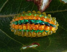 Jewel caterpillar of a dalcerid moth (Acraga sp ?) by artour_a, via Flickr