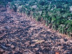 Amazon Forest Before and After | ... amazon. Slash-and-burn as we colonize new stretches of the rainforest