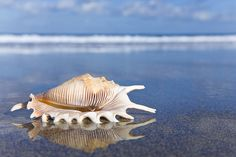 Seashell on wet sand with reflection