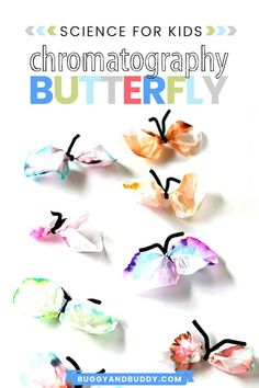 This butterfly craft is also a science experiment! Explore chromatography using coffee filters and turn your results into colorful butterflies for spring or any time of year! The STEAM activity is a fun hands-on learning activity for all ages- preschool, kindergarten, first grade all the way to upper grades. They also make fun birthday or spring decorations for your home or classroom! #springcraft #steam #scienceforkids #craftsforkids # butterflycraft #coffeefiltercraft