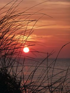Sunset through the Grasses   Brewster, Cape Cod by Sue Zamecnik