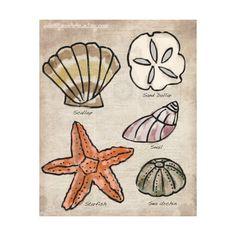 Seashells Print - Illustration quirky doodle. $14.00, via Etsy.