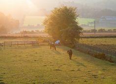 Horses at Sunset, North Kessock, Scotland.  If you love horses: ~~~> www.happyhorsehealthyplanet.com