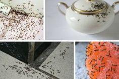Jednoduchý a veľmi efektívny trik ako sa zbaviť mravcov vo svojom dome Alcoholic Drinks, Glass, Home Decor, Ideas, Buxus, Tips, Technology, Decoration Home, Drinkware