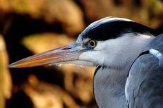 bird crane aquatic  iphone 7 download high resolution