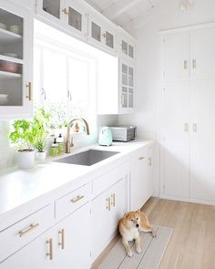 Can you believe this #kitchen was done on a budget? Plus how cute is this pup?! | Photography + Design: @hellohoku