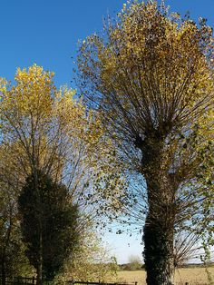 Spring trees: where the children of the trees are reborn and ages through summer and autumn