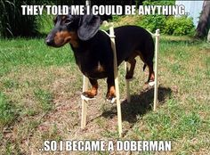 They Told Me I Could Be Anything - So I Became a Doberman