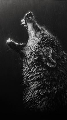 Simple, Wolves.