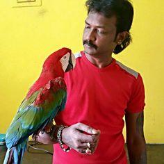 Green wing Macaw  Visit us at -   www.preethifarms.com