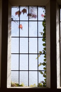 Window in Memorial Hall - Autumn 2010 by Lincoln University NZ, via Flickr