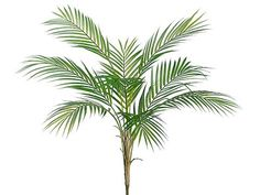 Looking for artificial tropical greenery to add to your beach weddings or destination weddings? Check out this beautiful green plastic areca palm plant. Simply add to your favorite container with foam and cover with moss to create a gorgeous tropical DIY arrangement!