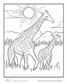 color the mother and baby giraffe