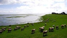 Hiking through history of Frisia, Westfriesland, Ostfriesland and Nordfriesland along Wadden Sea and North Sea North Sea, Beautiful World, Trail, Coast, Germany, Hiking, River, Island, History