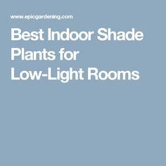 Best Indoor Shade Plants for Low-Light Rooms