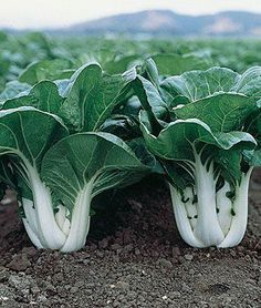 Do you think your gardening is over when Fall arrives?  No way!  Here are 10 great vegetables that you can grow in the Fall.