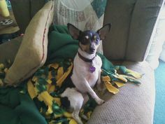 This is my little Beatrice (aka Bubbie) isn't she just a doll? She rarely poses like this. <3