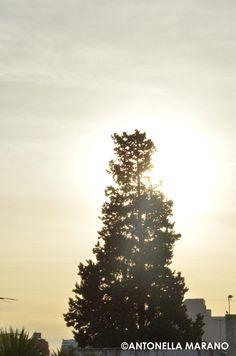 Donde el sol se esconde.
