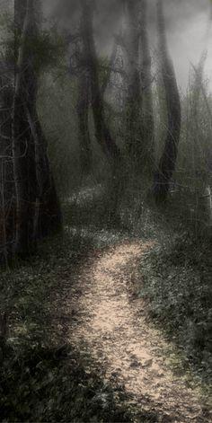 Wat trekt jouw aandacht het meeste? De bomen? Het pad? Het licht rechtsboven? Jouw focus zegt iets over wat nu belangrijk voor jou is in je leven.