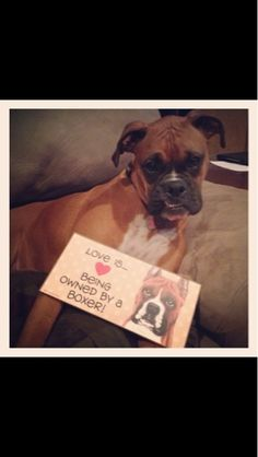 Cali is blogging again, and she wants you to know what love is...