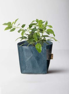 The Oslo charcoal grey paper pot is part of our stunning and unique new collection of 100% waterproof recycled paper products. A great pot for a succulent.