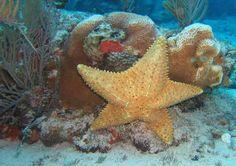 2 Reef Cozumel Snorkel Tour Shore Excursion & Cruise Excursion in Cozumel, Mexico