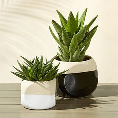 Shop dice planters.   Planters take a fashionable spin glazed half in glossy, half left au naturel.  Crafted from natural clay stoneware, two-tone vessels pair hi-lo with their twin.  dice planters is a CB2 exclusive.