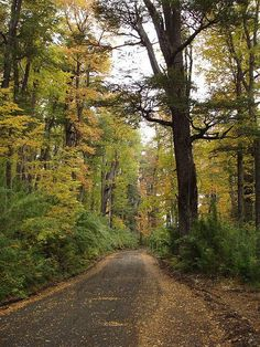 Bosques de mi patagonia querida.