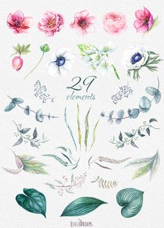 This set of 29 high quality hand painted watercolor flowers: Pink and white flowers: Helleborus (hellebore) Flowers, Anemone, Ranunculus, Eucalyptus,