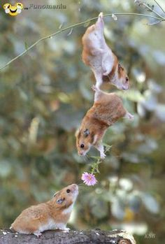 dont worry be happy - Wingman of the year #squirrel #love #flower #gentle #relation #flirt - Funomenia