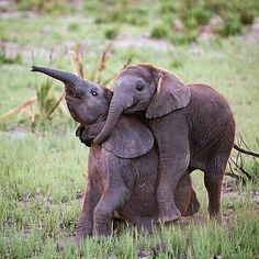 Hug me  Photo by @theglobalphotographer  #wildlifeonearth