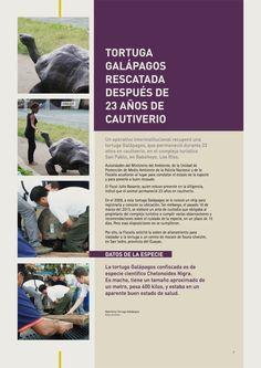Tortuga galápagos rescatada después de 23 años de cautiverio
