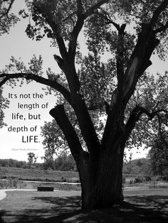 Black and White Photography Infinite Wisdom Tree, Art With Quotes. My black and white photography captures a large, wizened old tree in a park setting. It invokes the desire to sit and ruminate about life while your eyes play over the patterns of leaves and shadows. It would make a beautiful addition to any collection of black and white photography, and would be an eye catching photo in any room. Photography Art Title: Life's Journey.