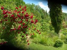 460 rozen-variaties in Le Jardin de Boissonna Plants, Plant, Planets