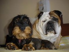 This may be the cutest pair of dogs i have ever seen!!