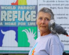 Geriatric and chronically ill parrots at the World Parrot Refuge in Coombs, operated by Wendy Huntbatch, are creating artwork for cards, which are then sold to raise money for a parrot palliative-care unit: