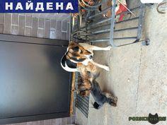 Найдена собака кобель г.Нижний Новгород http://poiskzoo.ru/board/read31210.html  POISKZOO.RU/31210 .. октября в посёлке Зелёный дол (между Нижним Новгородом и Афонино) найдена собака, видно что домашняя, ни кто к себе забрать не может! Хозяин отзовись! ( найдена собака та что побольше, маленькая наша)  РЕПОСТ! @POISKZOO2 #POISKZOO.RU #Найдена #собака #Найдена_собака #НайденаСобака #Нижний #Новгород